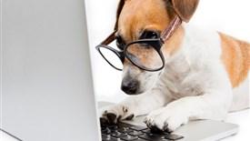 سگ ها باهوشترند یا گربه ها؟