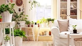 پانزده گیاه که برای اتاقهای گوناگون خانه مناسب هستند