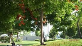 چگونه طبیعت را در زندگی شهری روزمره تان جا بدهید