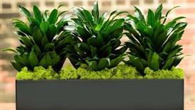 5 گیاه تصویه کننده هوا که سلامت شما را ارتقا میدهند
