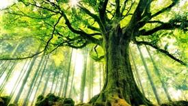 درختان به کاهش دمای زمین کمک زیادی میکنند